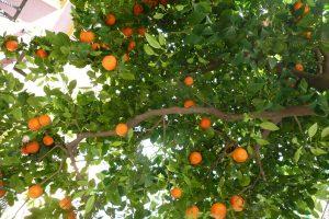 Sevilla, low hanging fruit